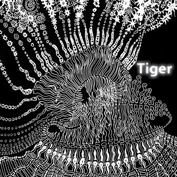 Tigerbild